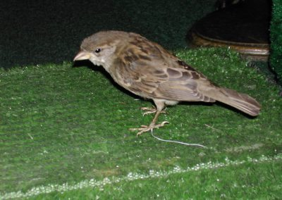 British Birds 151