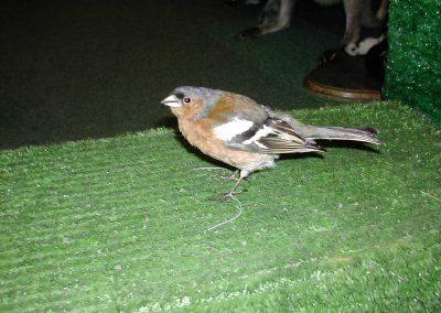 British Birds 152