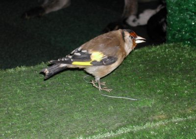 British Birds 153