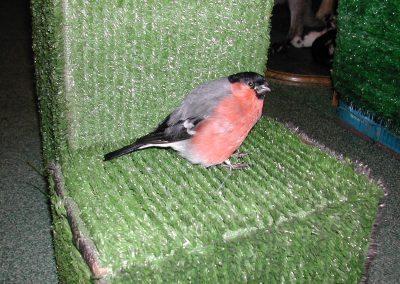 British Birds 155