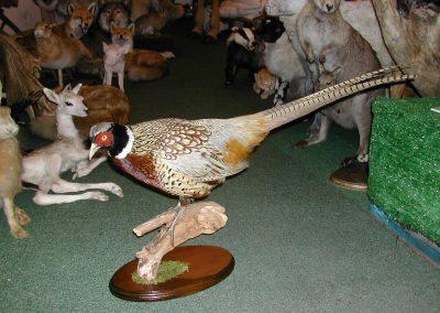 British Birds 157