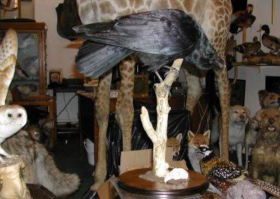 British Birds 161