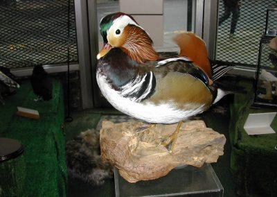 British Birds 163