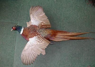 British Birds 165