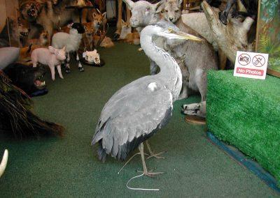 British Birds 166