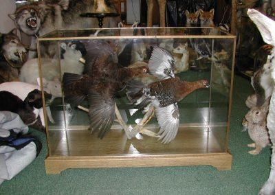 British Birds 168