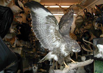 British Birds 169