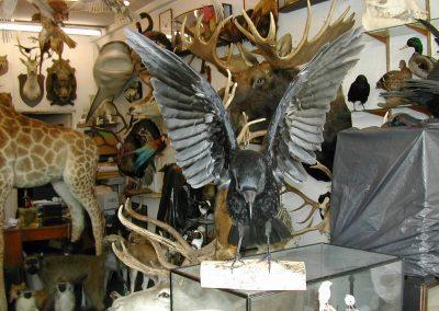 British Birds 172