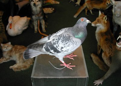 British Birds 173