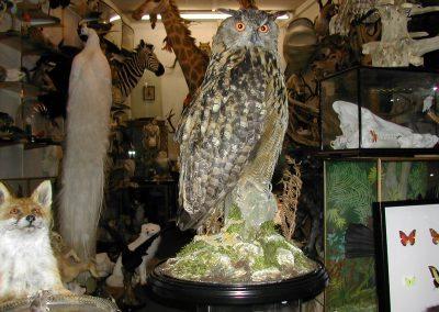 British Birds 179