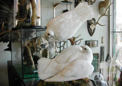British Birds 180