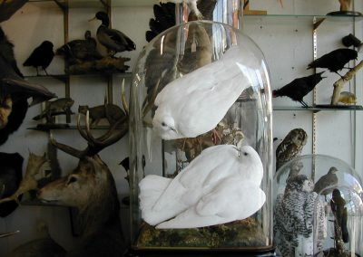 British Birds 181