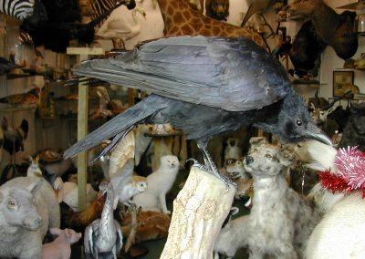 British Birds 183