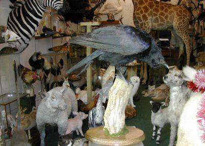 British Birds 184