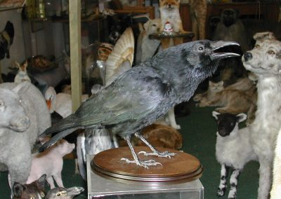 British Birds 185