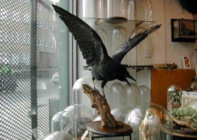 British Birds 190