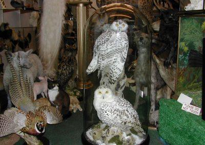British Birds 194
