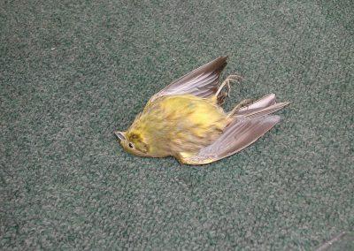 British Birds 201