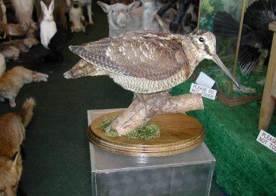 British Birds 202