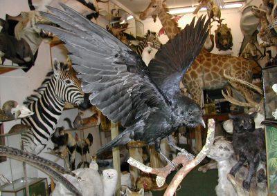 British Birds 208