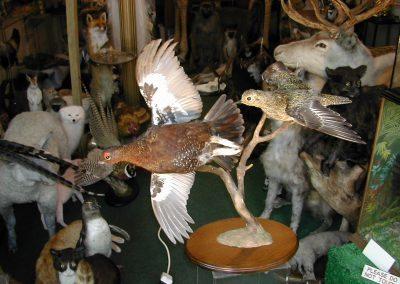 British Birds 210