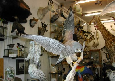British Birds 214
