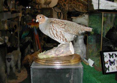 British Birds 215