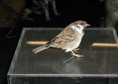 British Birds 217