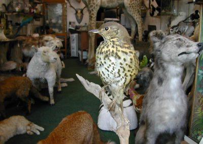 British Birds 219