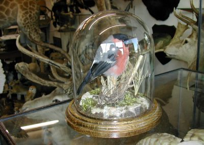 British Birds 224