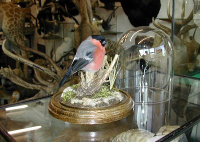 British Birds 225