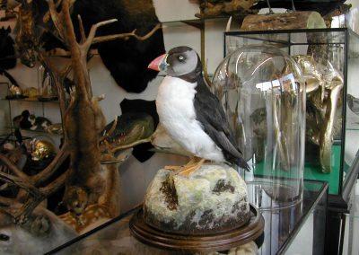 British Birds 227