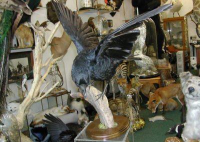 British Birds 243