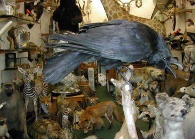 British Birds 244