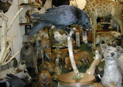 British Birds 245