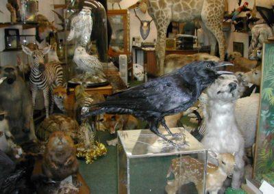 British Birds 246