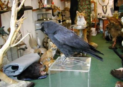 British Birds 252