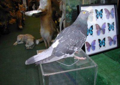 British Birds 255