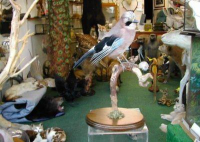 British Birds 260