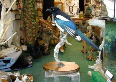 British Birds 262