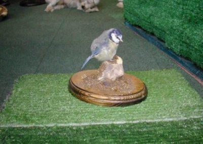British Birds 263