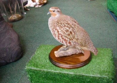 British Birds 264