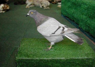 British Birds 265