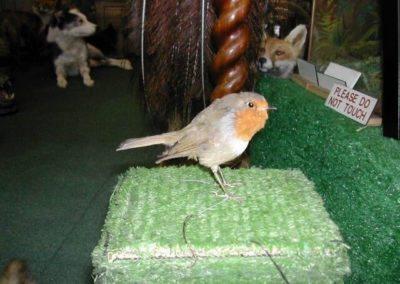 British Birds 267