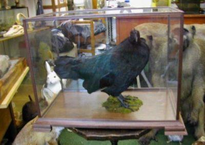 British Birds 269