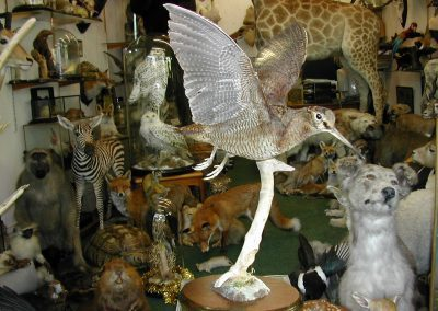 British Birds 237