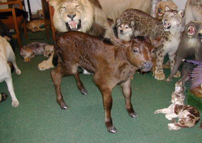 British Mammals 018