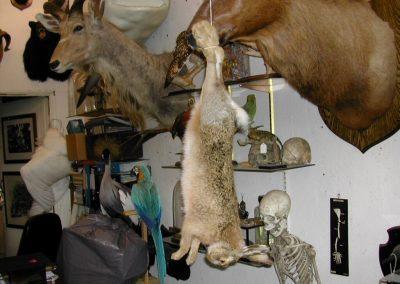 British Mammals 022