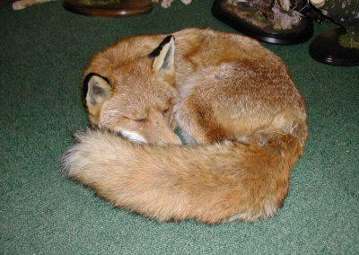 British Mammals 028