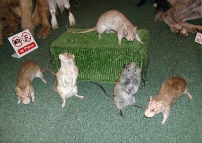 British Mammals 031